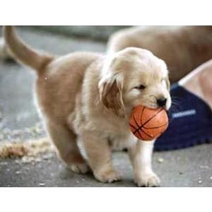 Gambar Gambar Puppy Mickey12357